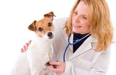 Finding The Right Vet For Your Pet