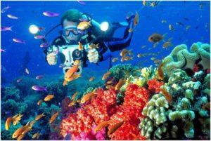 Great Destination For Scuba Diving