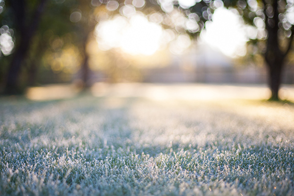 How to Prepare Your Lawn for Winter: 6 Crucial Tasks